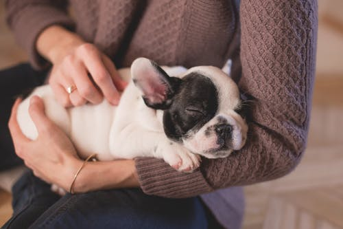 How to Prevent Dental Disease in Pets