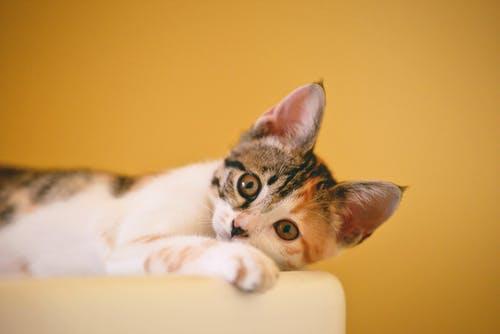 Understanding Common Types of Veterinary Services