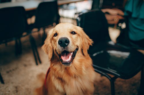 Pet Hygiene: What You Need To Know
