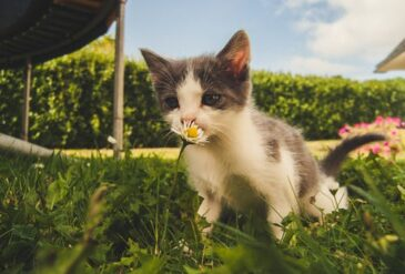 Vaccinating Your Cat – Is It Necessary?